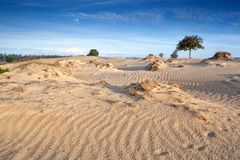 Wind texture on sand dunes Stock Photography
