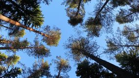 Wind in the trees from low angle stock video footage