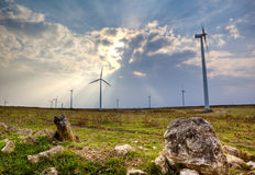 Wind turbine. Landscape with wind turbine and fields royalty free stock images