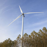 Wind turbine above trees in holland Royalty Free Stock Photos
