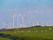 Wind Turbine and Birds Stock Photo