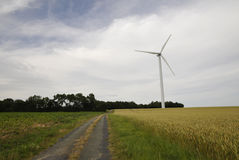 Wind turbine with a cereal fields Royalty Free Stock Image