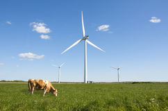 Wind turbine clean green energy. Ecology cow grazing in the green fields, wind turbines in the background, clean energy concept Royalty Free Stock Image