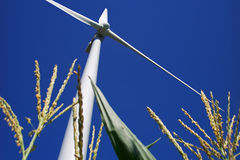 Wind Turbine in Corn. A wind turbine in a farm field shot at a low angle with a corn crop visible Stock Photos