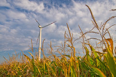 Wind turbine on corn field Stock Images