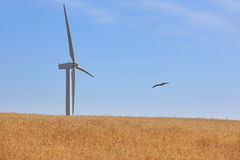 Wind turbine in the countryside. Clean alternative renewable ene Stock Photography