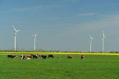 Wind turbine and cows Stock Photography
