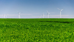 Wind turbine in crop field Royalty Free Stock Image