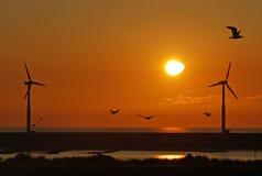 Wind turbine farm with birds Royalty Free Stock Image
