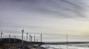 Wind turbine farm in the wadden sea, Esbjerg, Denmark Royalty Free Stock Images