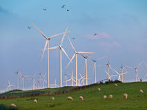 Wind Turbine and Birds Royalty Free Stock Photos