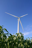 Wind turbine in a field. Wind turbines in a field of green corn, in summer Stock Photo