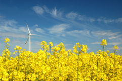Wind turbine on field of oilseed rape Royalty Free Stock Image