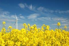 Wind turbine on field of oilseed Royalty Free Stock Image