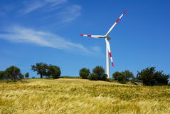 Wind turbine and golden wheat Royalty Free Stock Photo