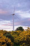 Wind Turbine and Gorse bushes Royalty Free Stock Photography