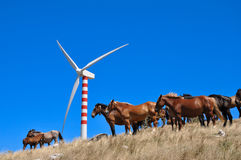 Wind turbine and horses Stock Photo