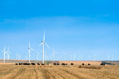 Wind turbine park in Romania Stock Image