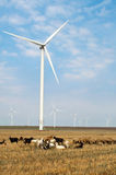 Wind turbine park in Romania Stock Photography