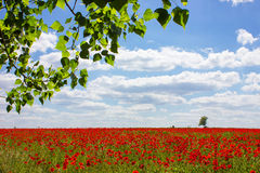 Wind Turbine and Poppies Stock Photo