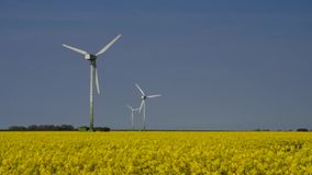 Wind turbine rape field stock video footage