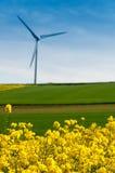 Wind turbine. Rapeseed field with wind turbine Stock Image