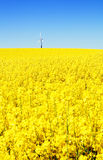Wind Turbine Rapeseed Field