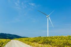 Wind turbine standing in sunflower field Stock Image