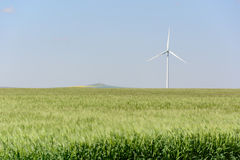 A wind turbine stands tall in a wheat field Royalty Free Stock Image