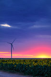 Wind turbine at sunset. In sun flower field Royalty Free Stock Image