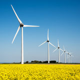 Wind turbine in a yellow field of rapeseed Stock Images