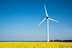 Wind turbine in a yellow flower field of rapeseed Royalty Free Stock Photography