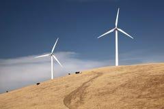 Wind-Turbinen auf einem Hügel mit Kühen Stockfoto