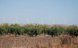 Wind-Turbinen und Olivenbäume Stockfotografie