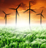 Wind turbines. Sunset over wheat fields with wind turbines Stock Photos