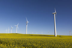Wind Turbines. Many wind turbines in a canola field on a bright sunny day Stock Images