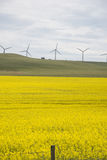 Wind turbines above fields of canola Stock Image
