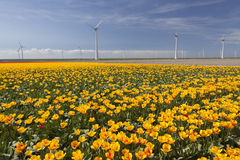 Wind turbines against blue sky with orange tulips in the foregro Stock Images