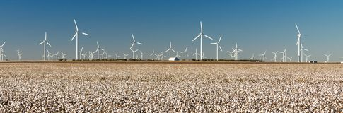 Wind Turbines Alternative Energy Texas Cotton Field Agriculture. Farm fileds do double duty in many parts of Texas royalty free stock photography