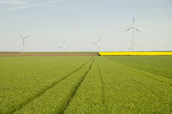 Free Wind Turbines And Rapeseed Fie Royalty Free Stock Photos - 2507888