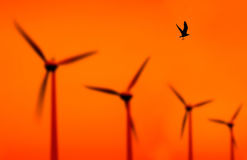 Wind turbines and bird Stock Photography