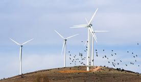 Wind turbines and birds. Birds flying in front of aerogenerators royalty free stock images