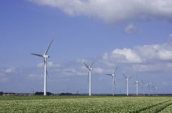 Wind turbines and blooming potato fields Royalty Free Stock Image