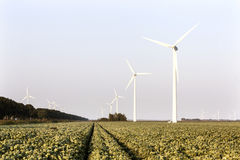 Wind turbines and cabbage field in the Netherlands Stock Photo