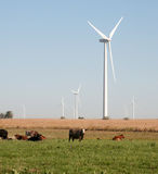 Wind turbines and cattle Royalty Free Stock Images
