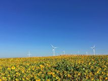 Wind Turbines In China. Wind turbines are working under the blue sky with lots of blooming sunflowers.It provides clean electronics power. It`s taken in Xinjiang Stock Photo