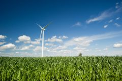 Wind turbines in corn field Royalty Free Stock Image