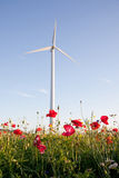 Wind turbines in corn field Stock Images