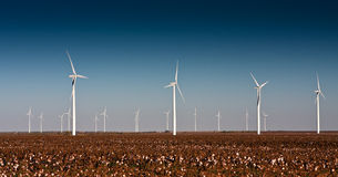 Wind Turbines in a Cotton Field Stock Image