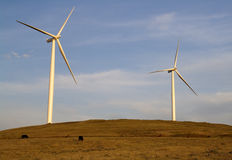 Wind turbines with cows Royalty Free Stock Images